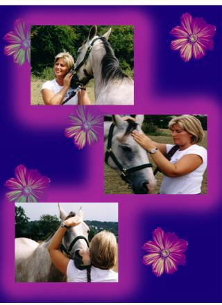 reiki_for_animals_Horse-healing